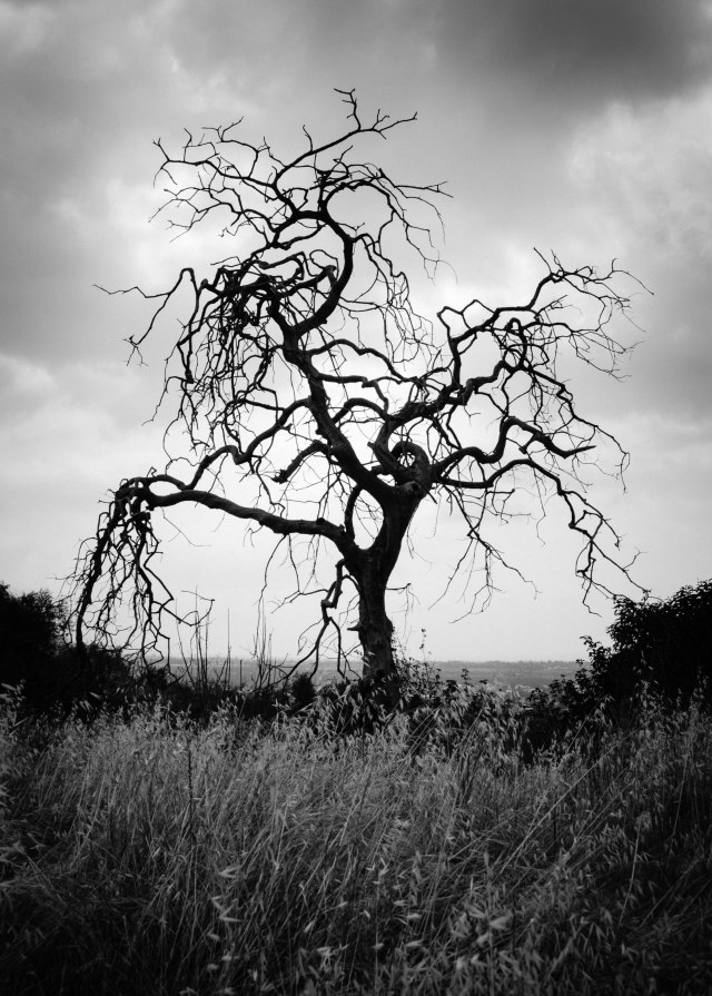 dead tree, black and white